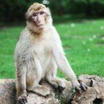 The Monkey King 2 Filmyzilla Movie Download in HD 720p